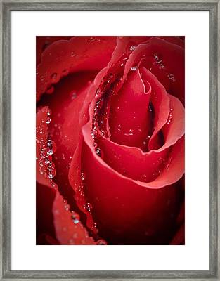 Wet Rose In Mexico Framed Print