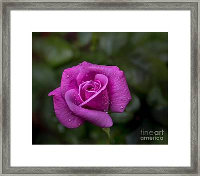 Wet Rose Framed Print by Michael Waters