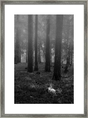 Wet Sheep Framed Print by Thomas Berger