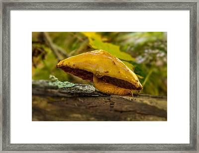 Wet Shroom Framed Print by Paul Freidlund