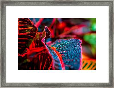 Wet Visions Framed Print