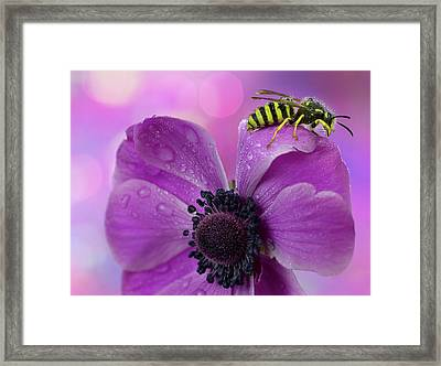 Wet Wasp Framed Print by Mikroman6