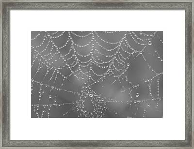 Wet Web Framed Print by Kimberly Oegerle