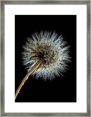 Wet Weed Framed Print by Jean Noren