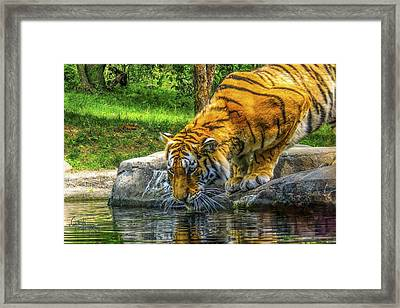 Framed Print featuring the photograph Wet Whiskers by Glenn Feron