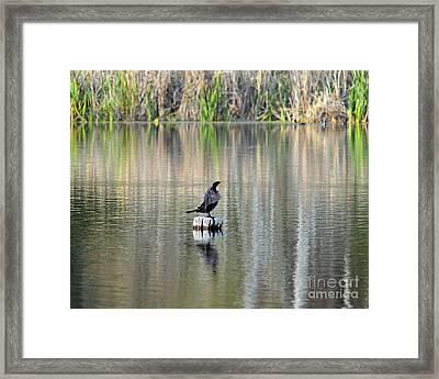 Wet Wings Framed Print