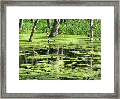 Framed Print featuring the photograph Wetland Reflection by Ann Horn