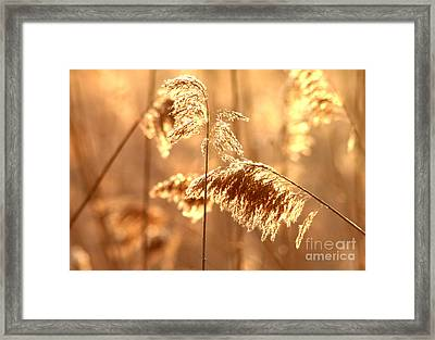 Wetland Sunrise Framed Print by Kenny Glotfelty