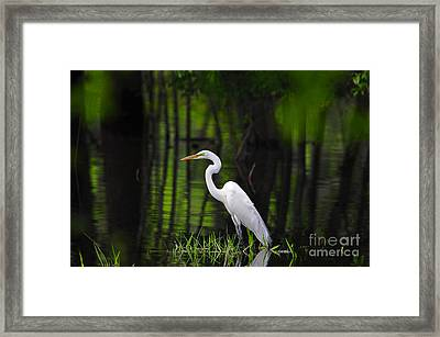 Wetland Wader Framed Print by Al Powell Photography USA