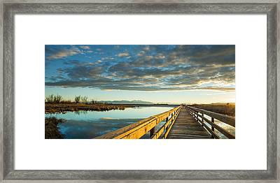 Wetland Wooden Path Framed Print by Jeremy Farnsworth