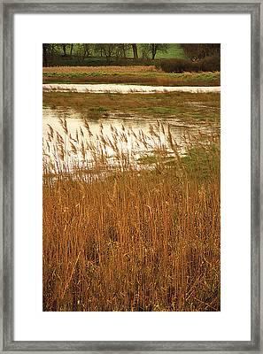 Wetlands Framed Print by David Davies