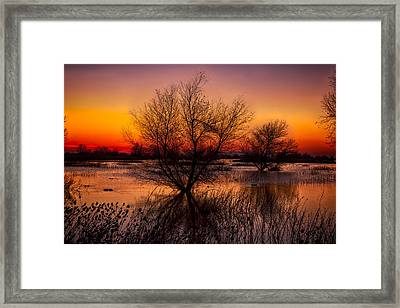 Wetlands Dawn Framed Print by Kathleen Bishop