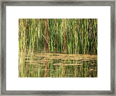 Framed Print featuring the photograph Wetlands by Laurel Powell