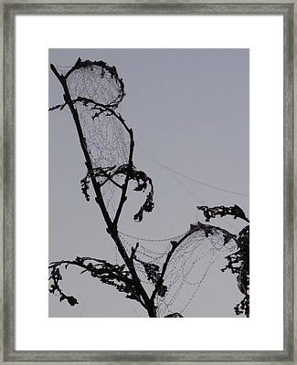 Wetting The Spiderweb. Framed Print