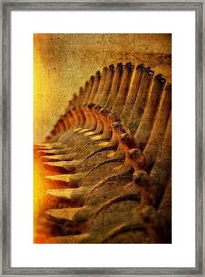 Whale Bone Framed Print by See My  Photos