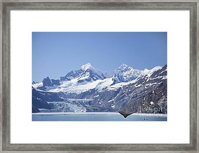 whale in Glacier Bay Park Alaska Framed Print by Nick Jene