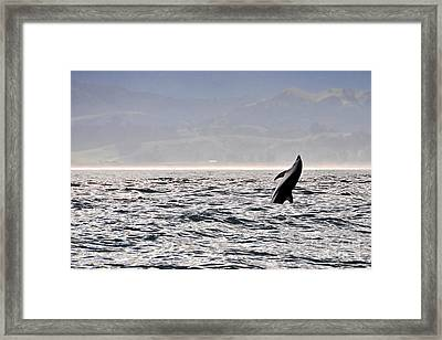 Whale Jumping Framed Print