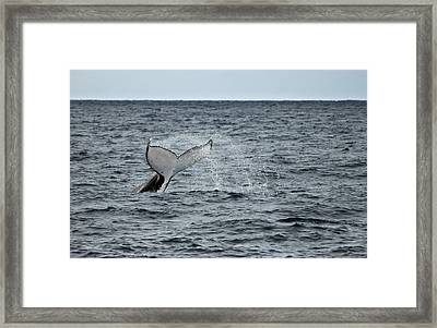 Framed Print featuring the photograph Whale Of A Time by Miroslava Jurcik
