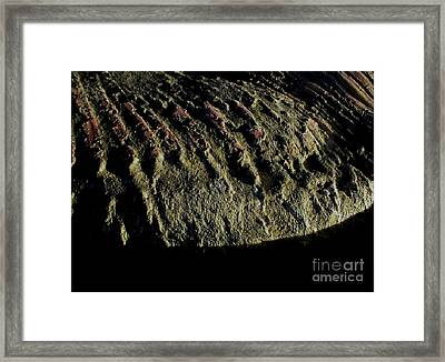 Whale On Stinson Beach 3 Framed Print