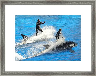 Whale Racing Framed Print