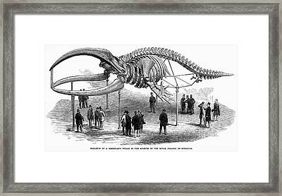 Whale Skeleton, 1866 Framed Print by Granger