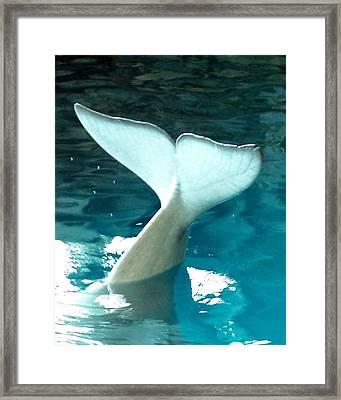 Framed Print featuring the photograph Whale Tail by Teresa Schomig
