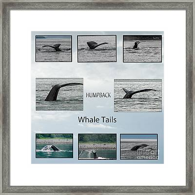 Whale Tails Framed Print by Robert Bales
