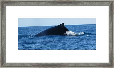 Framed Print featuring the photograph Whale by Tony Mathews