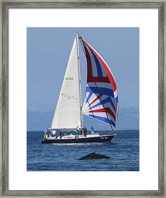 Whale Watching 1 Framed Print