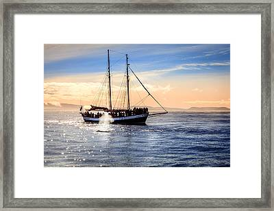 Whale Watching Framed Print by Alexey Stiop
