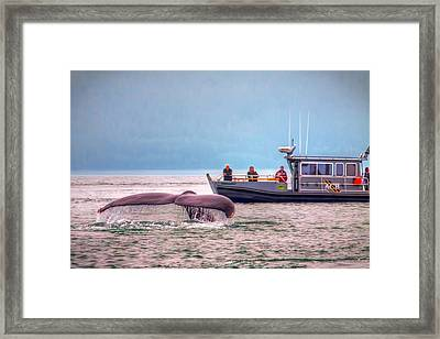 Whale Watching Framed Print by Tom Weisbrook