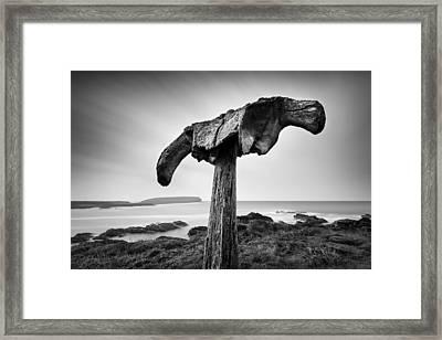 Whalebone Framed Print