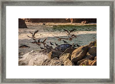 Whalers Cove Birds Framed Print by Mike Penney