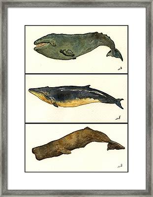 Whales Compilation 2 Framed Print by Juan  Bosco