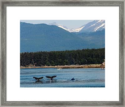 Whales In Alaska Framed Print
