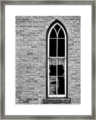 What 800 Lbs Gorilla Bw Framed Print by Steve Harrington