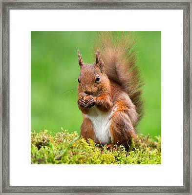 What A Beautiful Nut Framed Print by Louise Heusinkveld