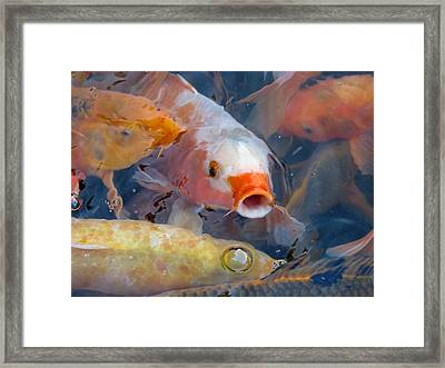 What A Crowd Framed Print by Laurel Powell