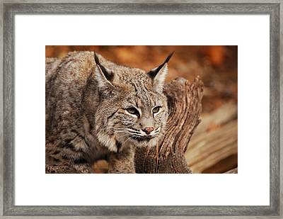 What A Face Framed Print by Lori Tambakis