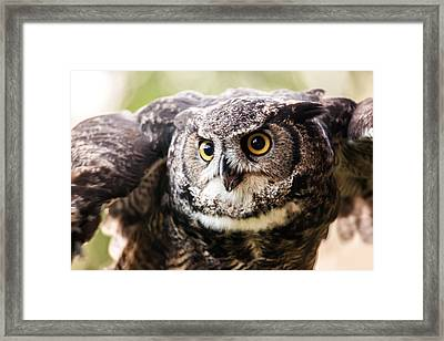 What A Hoot Framed Print