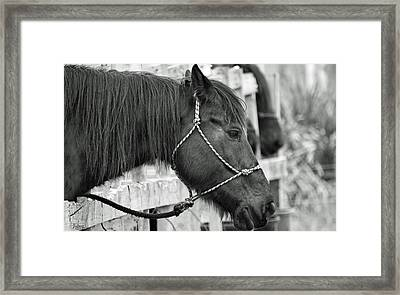 What A Horse Framed Print