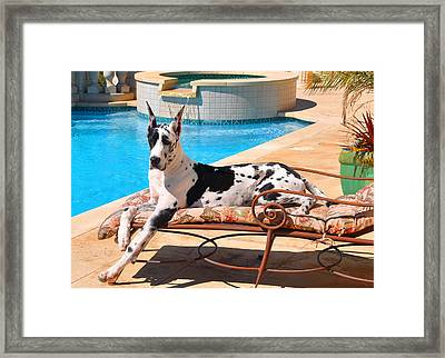 What A Life Framed Print
