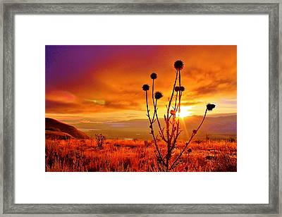 What A Morning Framed Print