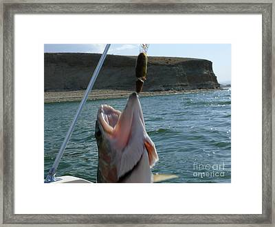 What A Mouth Framed Print by Jeff Pickett