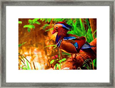 What A Strange Duck You Are, May I Take Your Picture   Framed Print by Hilde Widerberg