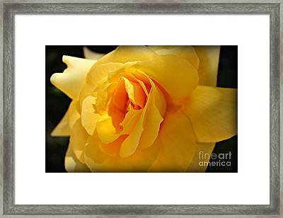 What A Stunner Framed Print by Clare Bevan