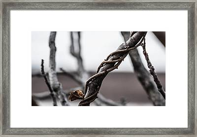 What A Twist Framed Print