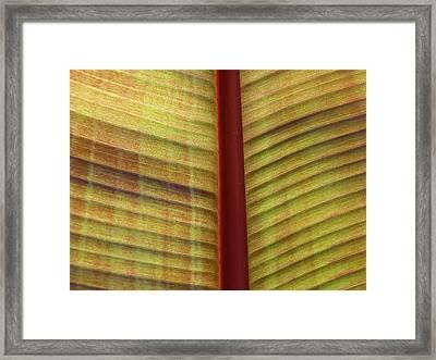 What Am I ? Framed Print by Jonathan Kratz