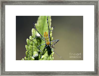 What Am I? Framed Print by Kristy Ollis