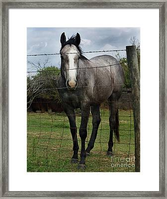 What Are You Afraid Of Framed Print by Peter Piatt